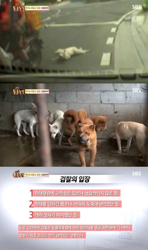 백구 오토바이 사건(사진=SBS '동물농장' 방송 캡처)