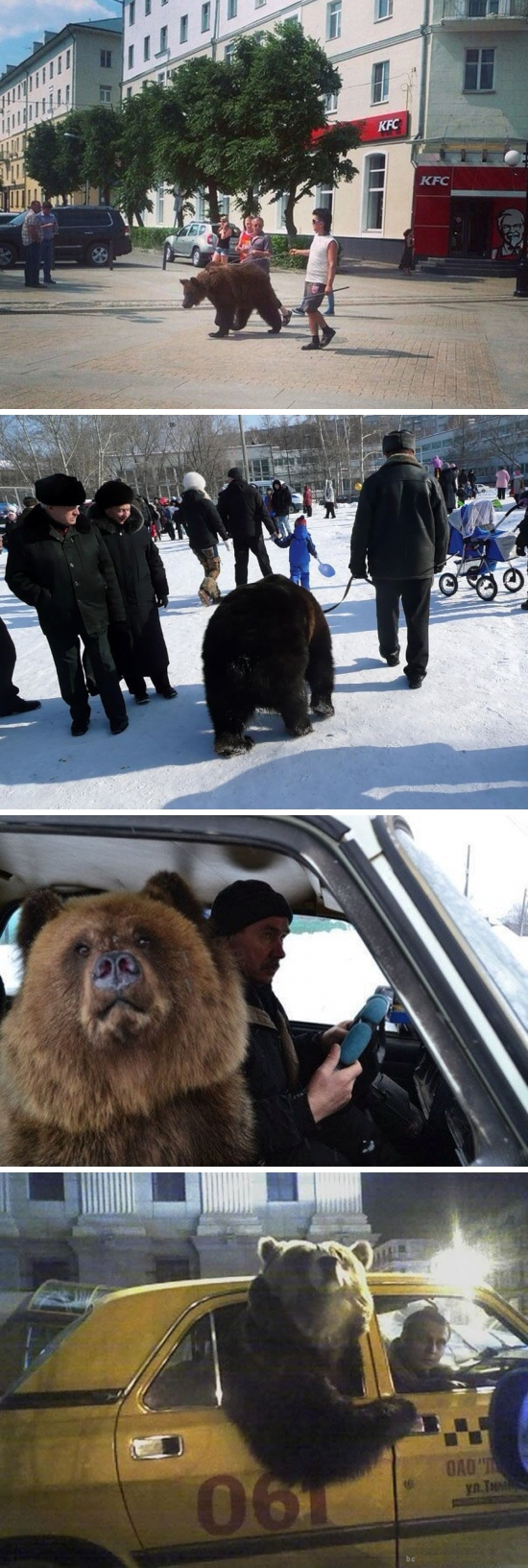 러시아 애완동물 곰 [사진=온라인 커뮤니티 캡처]