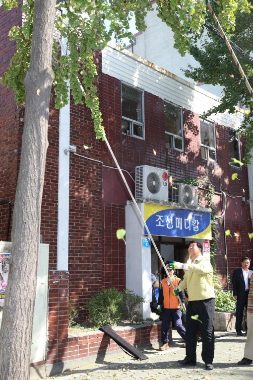 조길형 영등포구청장이 지난해 10월 은행나무 열매를 털고 있다.