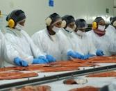 노르웨이 세르마크의 칠레 연어 가공 공장. 사진=언더커런트뉴스
