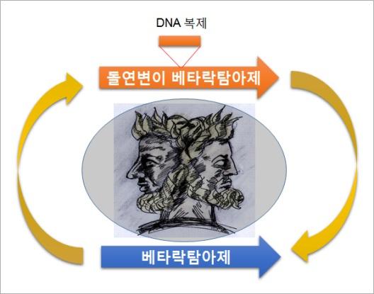 ▲세균 내성에 대한 매커니즘이 규명됐다.[사진제공=미래부]