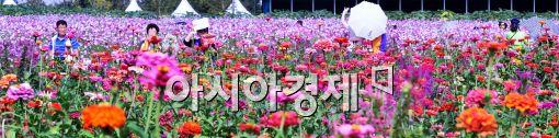 [포토]가을 맞이 꽃길 걷는 시민들