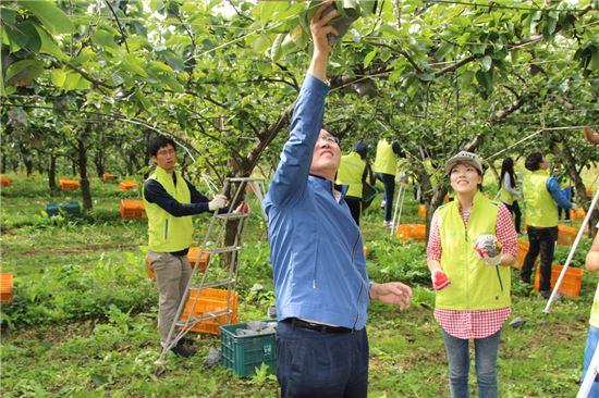 NH농협손해보험 김진우 부사장(사진 가운데)과 헤아림 봉사단원들이 지난 1일 경기도 이천시 소재 배 농가를 방문 배 수확 작업을 하고 있다.