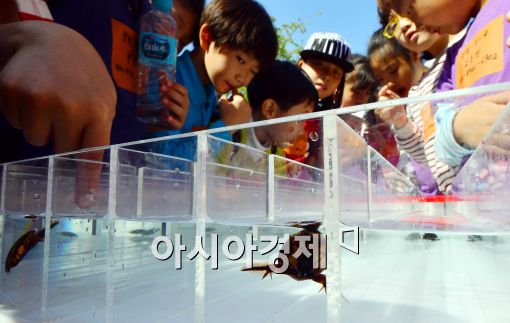[포토]곤충올림픽대회 물방개 레이싱