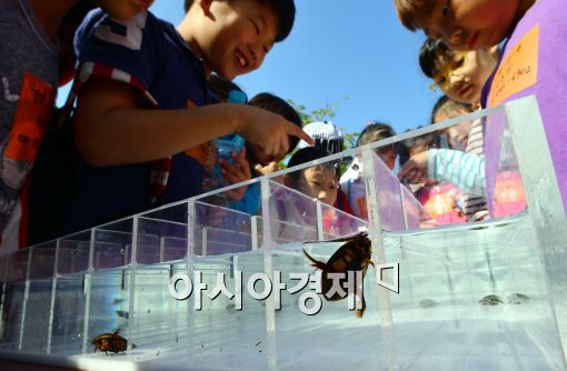 [포토]곤충올림픽에 출전한 물방개들