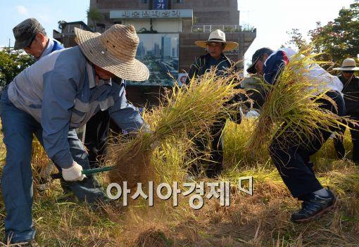 [쌀의 경제학]추가격리에도 쌀값 더 떨어졌다…창고마다 쌀 가득가득