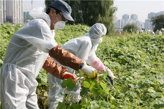 동부화재 임직원들이 18일 밤섬에서 생태계교란식물 제거 작업과 쓰레기 수거 등 환경정화활동을 하고 있다.