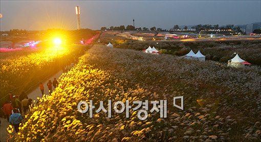 [포토]황금빛으로 물든 억새밭