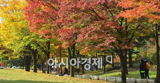 [포토]가을의 색