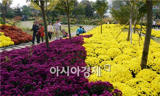 전형적인 가을 날씨가 이어진 가운데 휴일인 26일 함평국향대전이 열리고 있는 함평엑스포공원에 전국에서 수많은 관광객들이 몰려들어  그윽한 국화향기를 맡으면서 깊어가는 가을을 만끽했다.