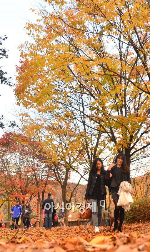 [포토]가을비 그치고...낙엽이