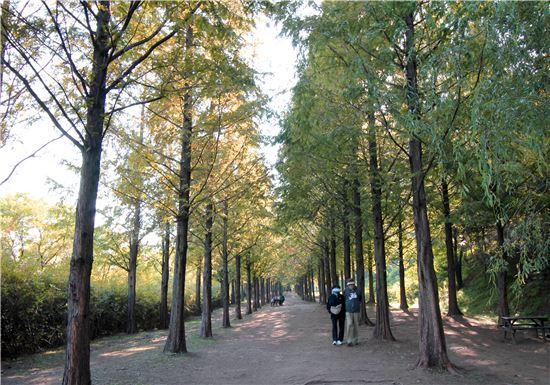 ▲서부공원녹지사업소가 소개한 월드컵 '걷기 좋은 예쁜길'(사진제공=서울시 서부공원녹지사업소)
