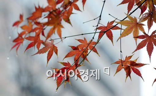 [포토]가을아 가지마