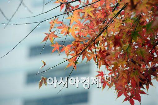 [포토]겨울을 부르는 가을비