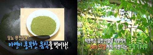 모링가 [사진출처=MBN '천기누설' 캡처]