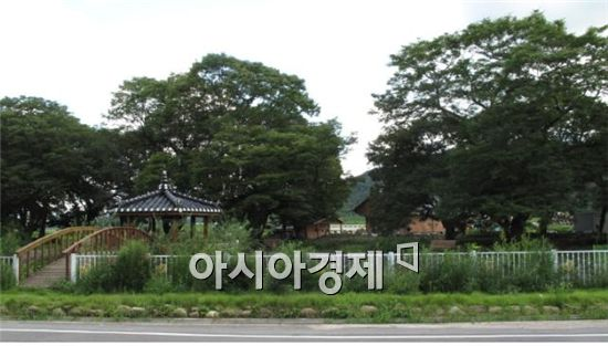 함평 모평마을 숲