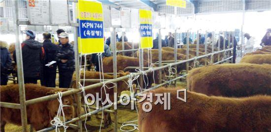 장흥군(군수 김성)은 18일 장흥축협 가축시장에서 양축농가와 한우 전문가 등 200여명이 참석한 가운데 제4회 장흥 혈통한우 경매행사를 가졌다.