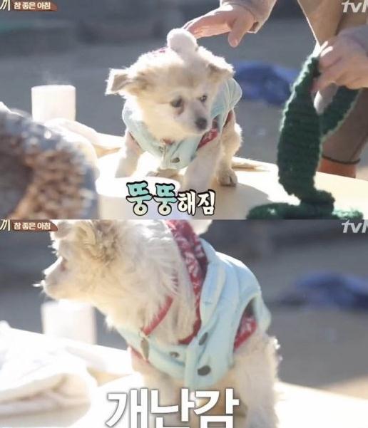 밍키 [사진출처=tvN '삼시세끼' 캡처]