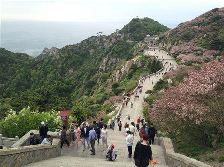 태산 정상을 오르기 위한 계단이 줄줄이 늘어선 모습. 케이블카를 이용하지 않는다면 7000여개의 계단을 밟아야한다.