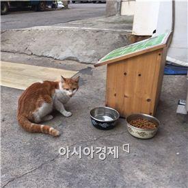길고양이의 모습. (사진=아시아경제DB)