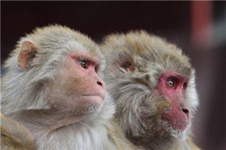 원숭이(사진 출처 = 게티이미지뱅크)