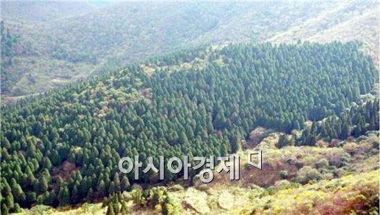 고흥 나로도 편백숲