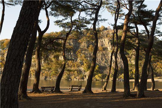 수령 90~150여 년 된 소나무 100여 그루와 마을 사람들이 정기적으로 심는 어린 소나무들이 함께 숲을 이루고 있는 하회마을의 숨은 명물 만송정.
