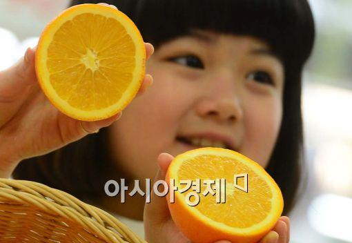 [포토]제철 오렌지 맛보세요~