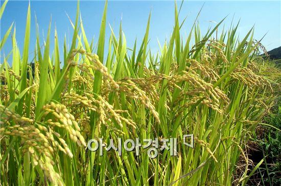 진도군이 전라남도 주관 친환경농업 대상을 수상했다.