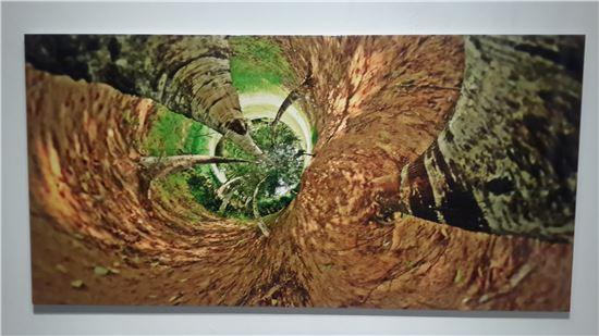 8월 14일, 일산 호수공원, 알락하늘소, 꽃매미 서식, c-print, 200*100cm