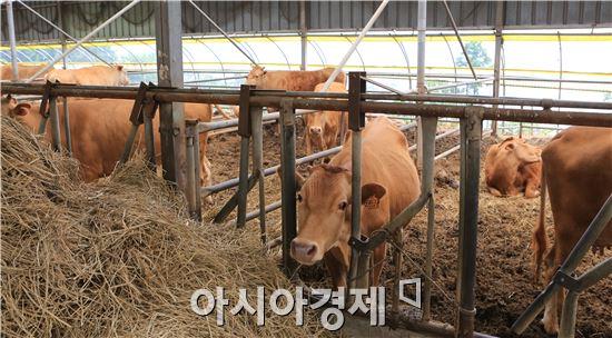완도군(군수 신우철)은 최근 전북 김제시 양돈농가가 구제역 확진 판정을 받음에 따라 구제역 유입을 차단하는데 총력을 기울이고 있다.