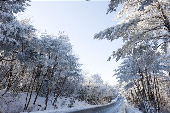 1100도로, 어리목광장, 516도로의 제주마방목지는 눈으로 뒤덮인 한라산을 조망할 수 있는 감상 포인트로 손꼽힌다.