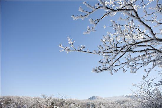 육지보다 겨울이 더디게 찾고 봄은 빨리 깃드는 제주도. 섬의 겨울 절경은 겨울왕국으로 변한 한라산이다.