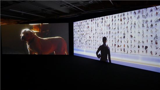 문경원&전준호_세상의 저편 El Fin del Mundo_2012. HD Film. 13min 54sec. Installation view