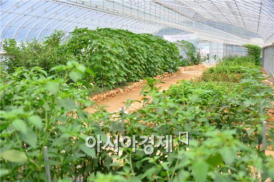 순창군이 농업을 의료개념과 연계해 추진하는 의농업사업을 도입해 농업경쟁력 강화에 나선다.
