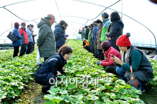 순창군이 신규 취농(신규로 농업에 종사하는 사람)지원 농지매입 공모사업에 선정됐다.