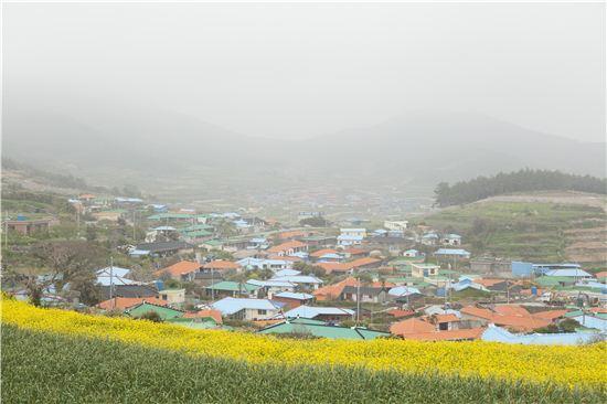 유채꽃과 청보리, 코스모스가 피는 언덕에서 바라본 섬마을의 풍경은 늘 서정이다.