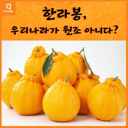 [카드뉴스]한라봉, 우리나라가 원조 아니다?