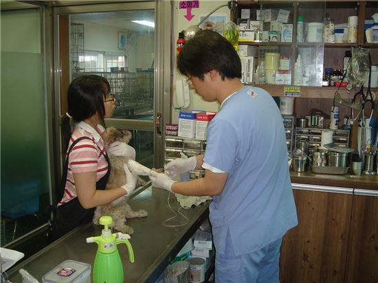 유기 동물 치료
