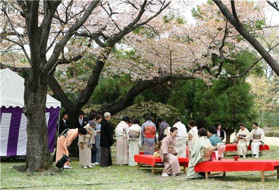 벚꽃이 피면 기모노를 차려 입고 봄맞이 다도회를 여는 교토 귀부인들. 교토다운 풍경이다.