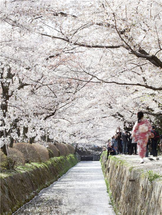 차를 타고 즐기는 꽃나들이가 아닌, 걸어야 제대로 봄맛을 느낄 수 있는 철학의 길.