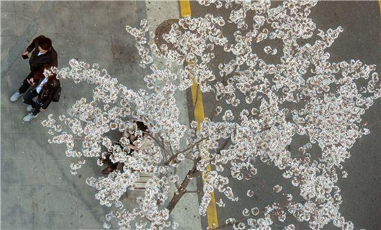 완연한 봄날씨를 보인 지난 6일 서울 서대문구 연세로에서 만개한 벚꽃 아래로 시민들이 지나가고 있다. 백소아 기자 sharp2046@