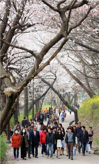 남경필 경기지사가 벚꽃 산책로가 마련된 팔달산 주변을 시민들과 함께 걷고 있다.