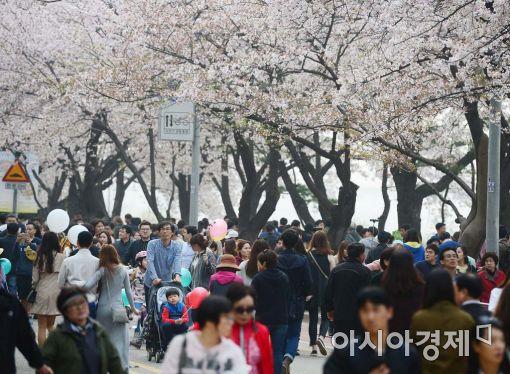 [포토]올봄 마지막 벚꽃 나들이