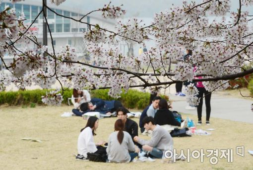 [포토]벚꽃나들이