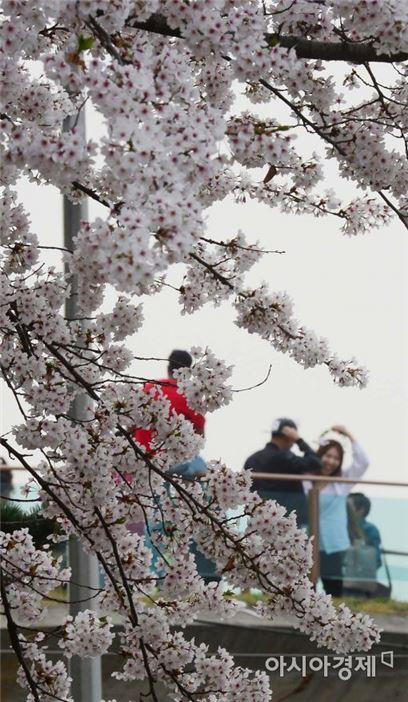 [포토]벚꽃엔딩
