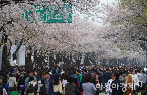 [포토]미세먼지도 막지 못하는 벚꽃나들이