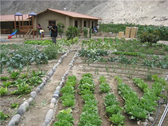 SK이노베이션 페루 지사가 만든 사회적 기업 '야차이와시'가 빈농들에게 농작물 재배법을 알려주기 위해 각종 허브를 키우고 있다.