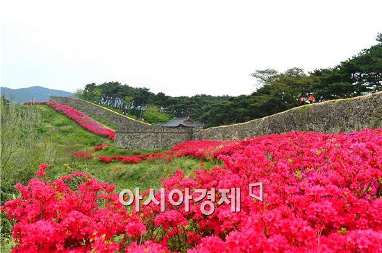 고창군 고창읍을 대표하는 관광명소 고창읍성은 지금 분홍빛 철쭉이 한창이다.