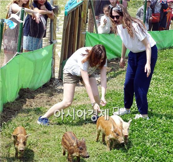 주말인 30일 함평나비대축제가 열리고 있는 함평엑스포공원을 찾은 외국인들이 가축몰이 체험을 하면서 즐거워하고 있다. '나비따라 꽃길따라'라는 주제로 오는 5월 8일까지 함평엑스포공원에서 열린다.